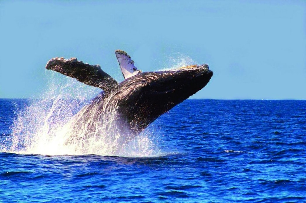 catalinas islands whale watching expeditions